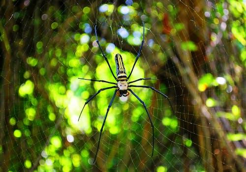 Základová fotografie zdarma na téma barva, déšť, divočina, hmyz