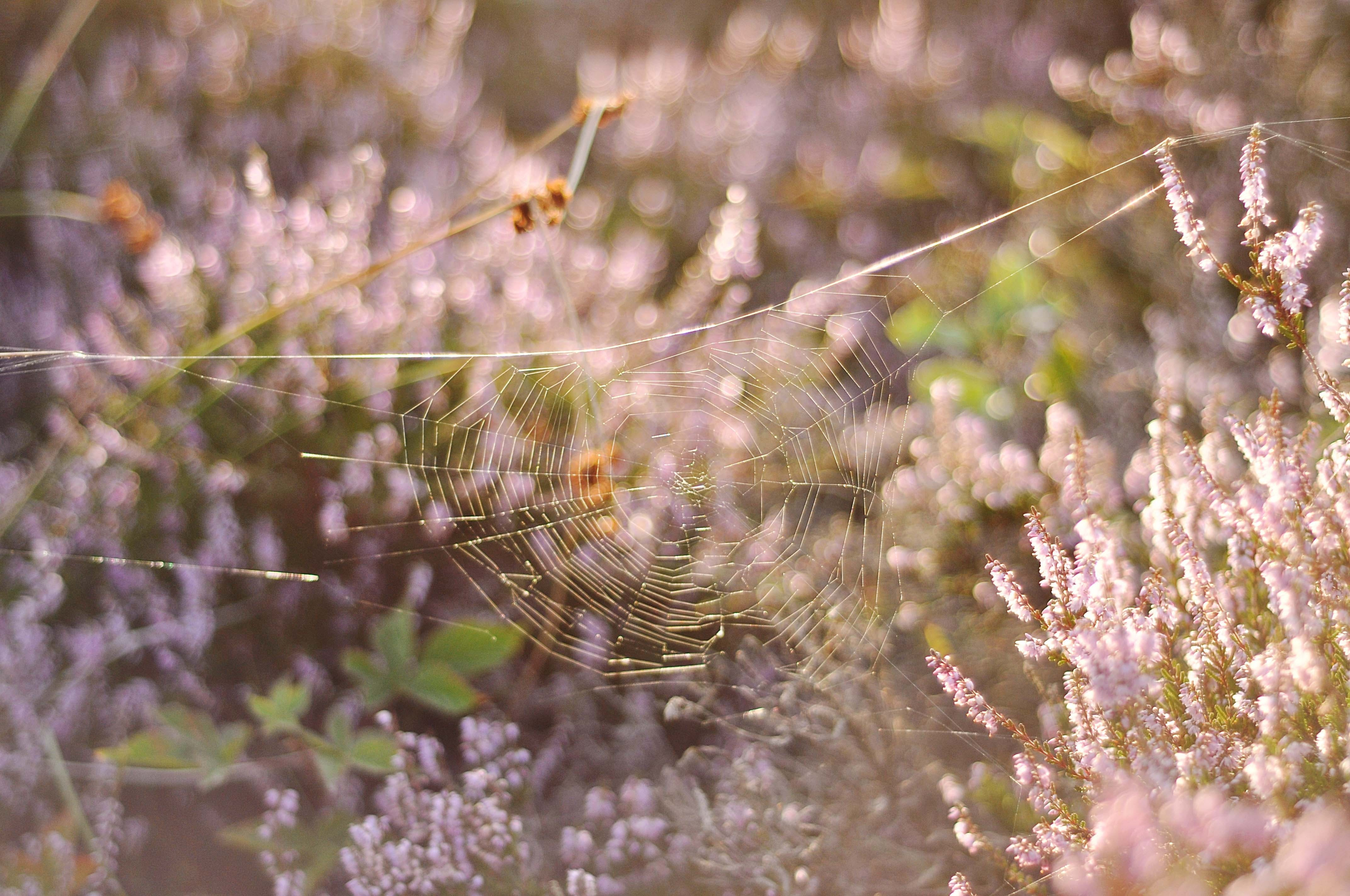 White Spider Web on Flower Field in Close-up Photography