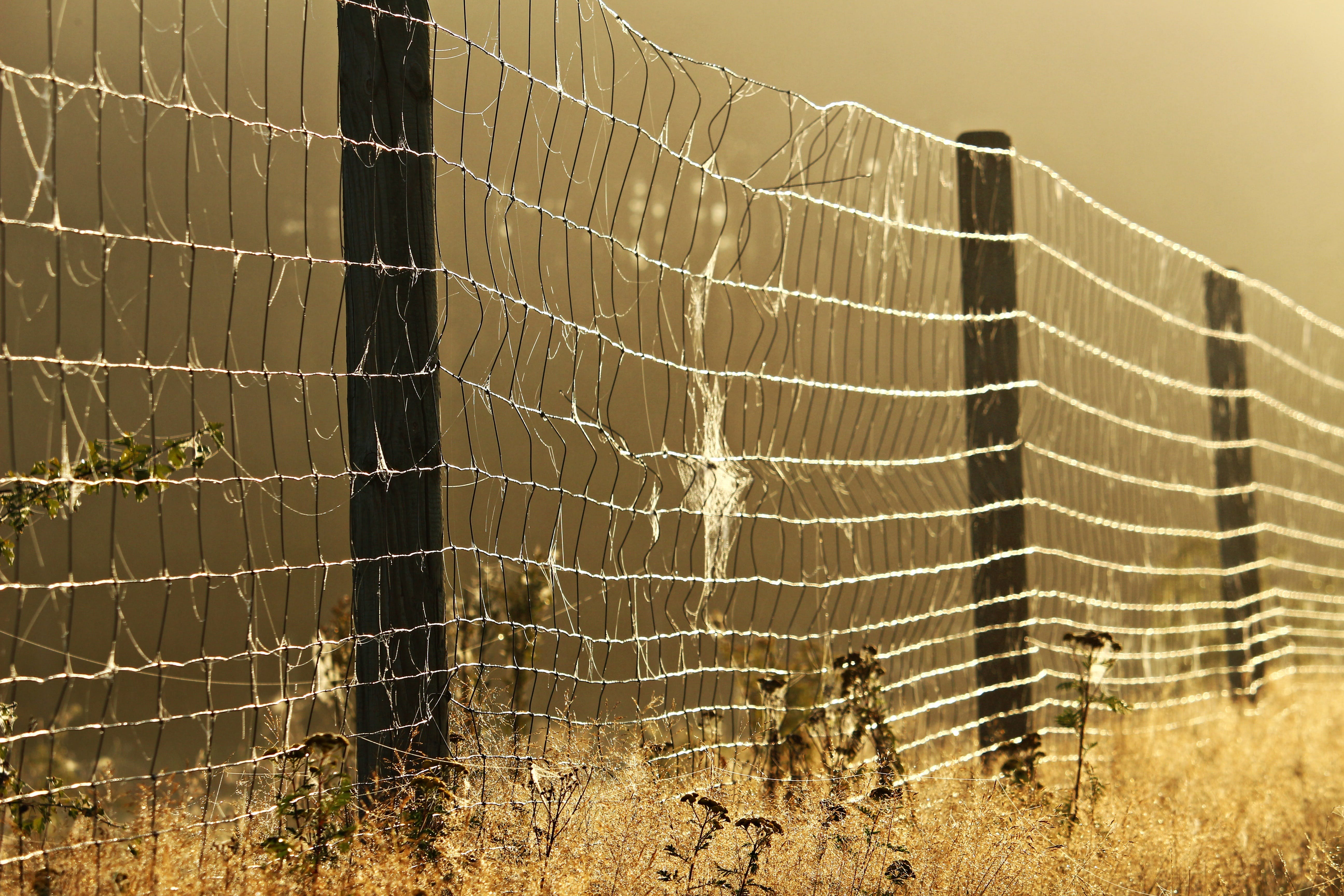 Free stock photo of autumn, away, early in the morning, fence