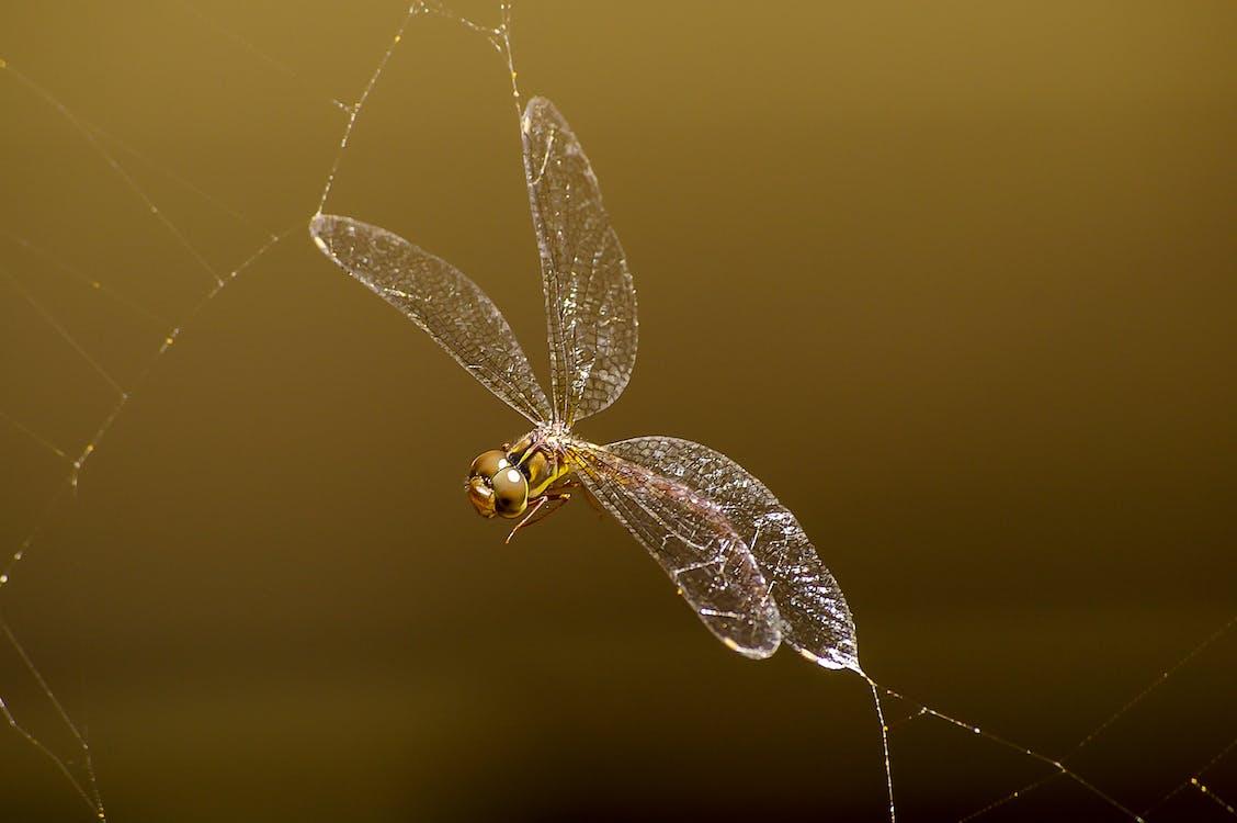 Macro Photography of Brown Darnersfly
