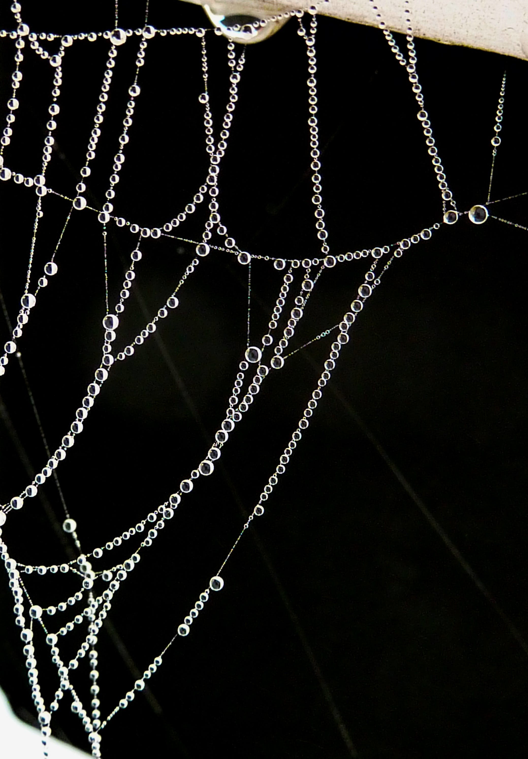 Closeup Photography of Dew Drops on Spider Web