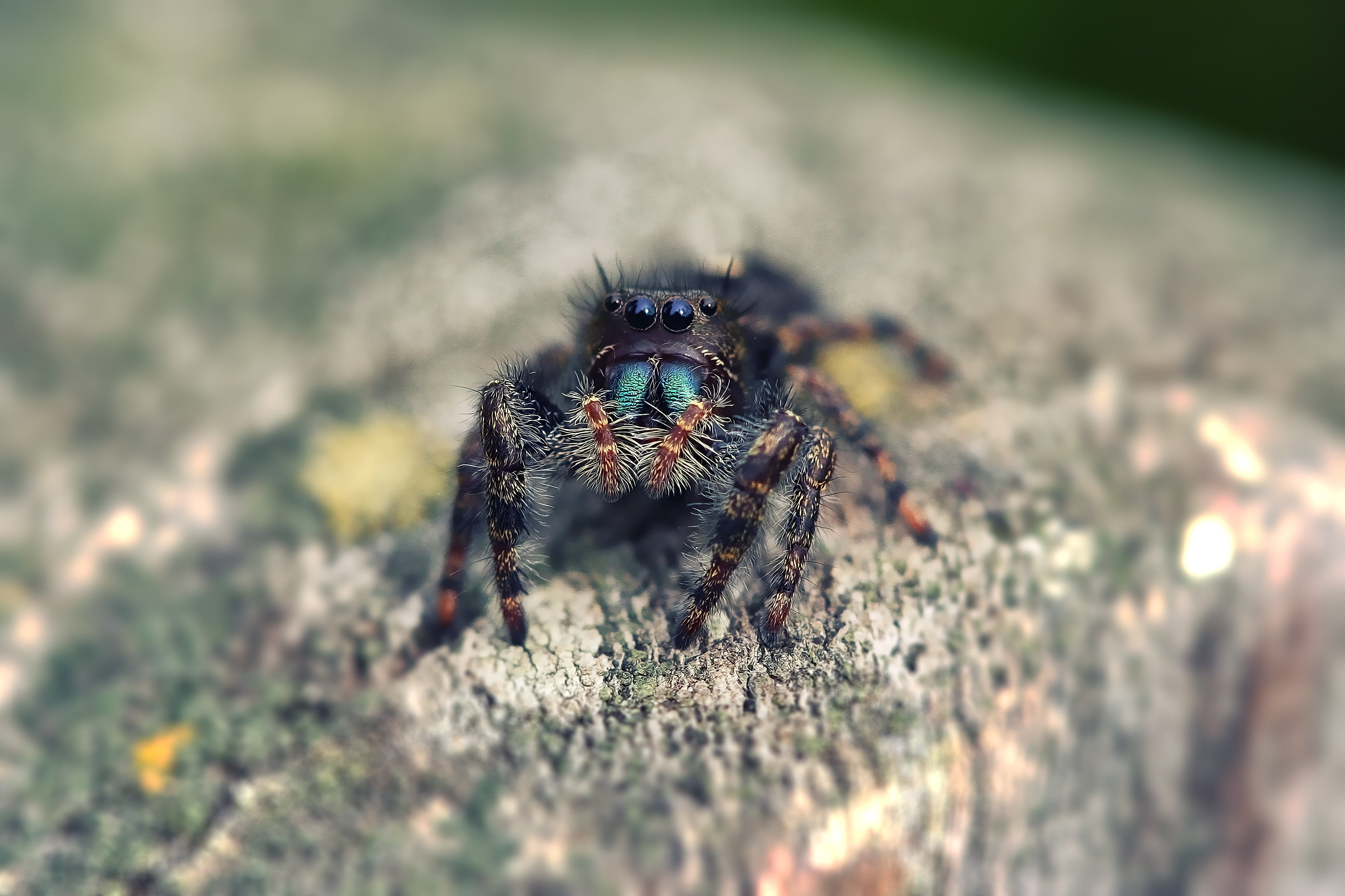 arachnid, blur, close-up