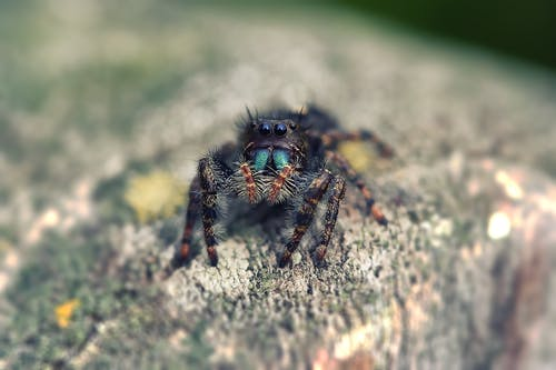 Selective Focus Photography of Jumping Spider