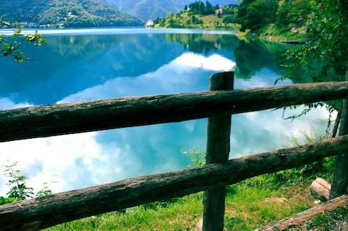 Fotos de stock gratuitas de agua, arboles, barandilla, bosque