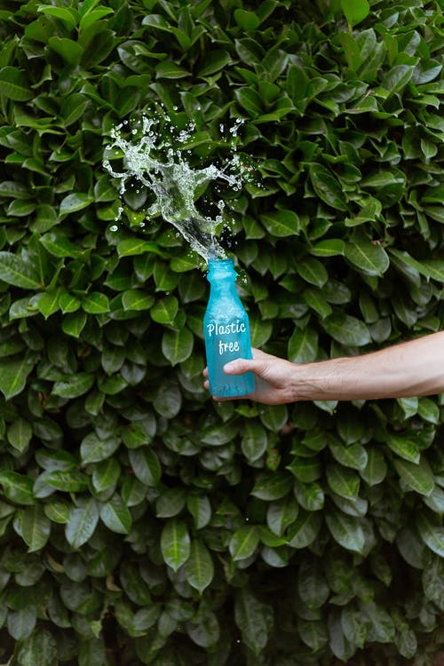 Person Holding Blue Plastic Bottle Splashing Water on Green Leaves