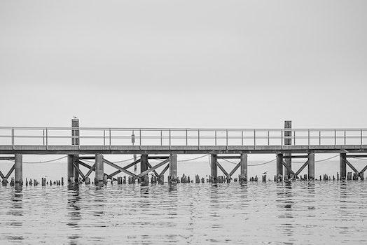 Free stock photo of jetty, sea, city, dawn