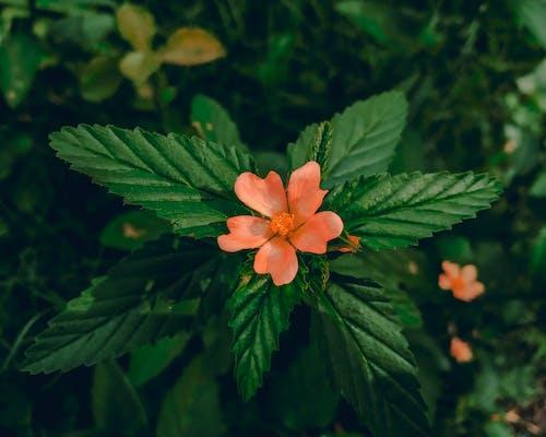 Gratis lagerfoto af blomsterflora, HD-baggrunde, sløret, sløret baggrund