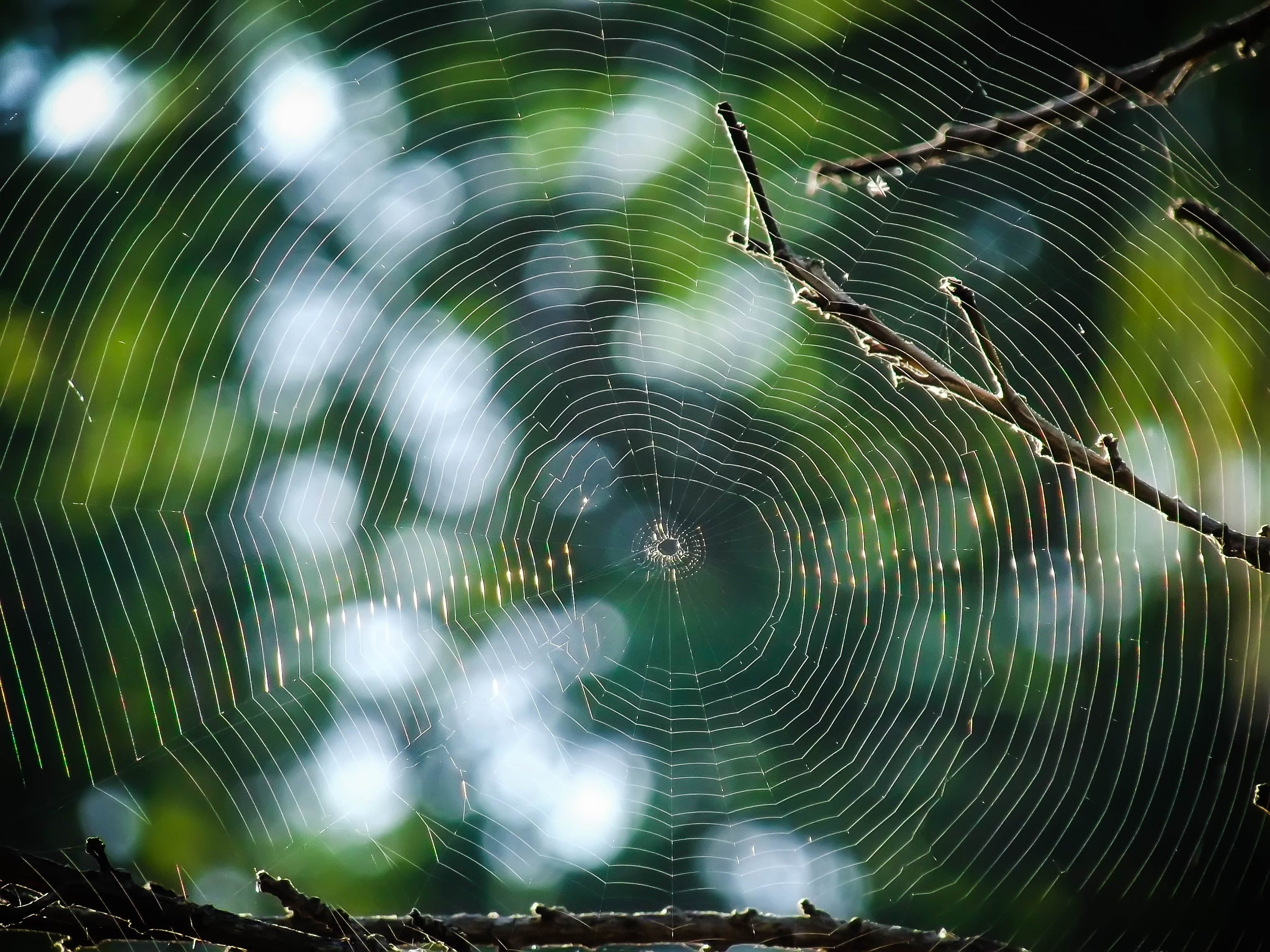 Macro Photography of Spider Web