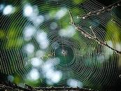 pattern, garden, blur