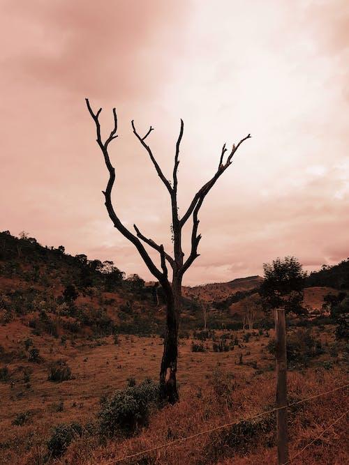 Gratis lagerfoto af bare træ, dødt træ, himmel, kraftværker