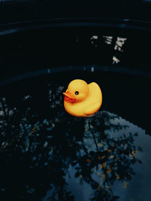 橡皮鴨, 水, 漂浮的, 濕 的 免費圖庫相片