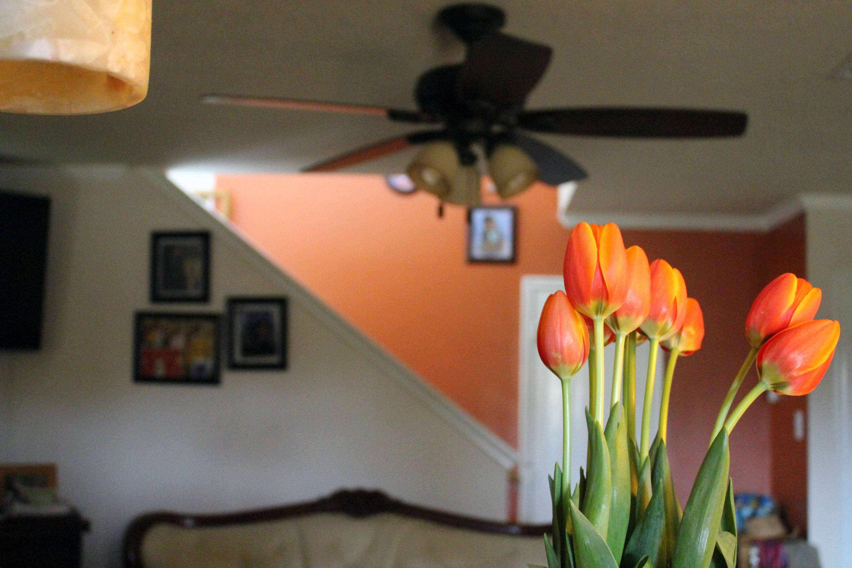 blooms, blossoms, ceiling fan