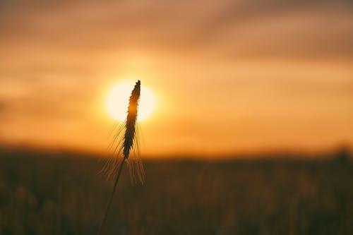 Foto profissional grátis de agricultura, alimentação, arável, área