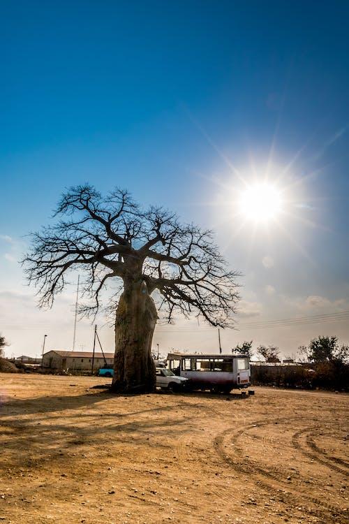 Ilmainen kuvapankkikuva tunnisteilla aikainen aamu, auringonnousu, aurinko puhkesi, baoba puu