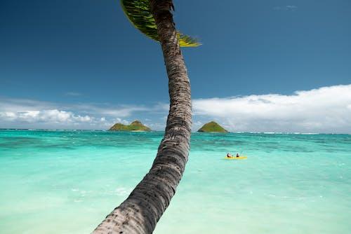 カヤック, ハワイ, ビーチ, ヤシの木の無料の写真素材