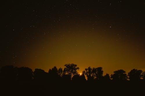 Безкоштовне стокове фото на тему «дерева, ніч, нічна фотографія, небо»
