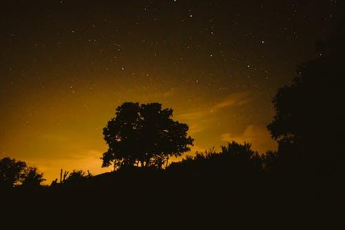 Безкоштовне стокове фото на тему «дерево, зірки, ніч, нічна фотографія»