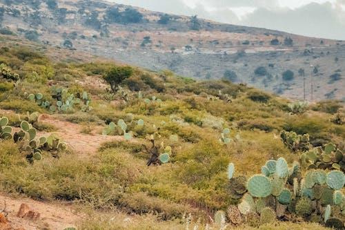 Kostenloses Stock Foto zu außerorts, berg, blühen, blüte