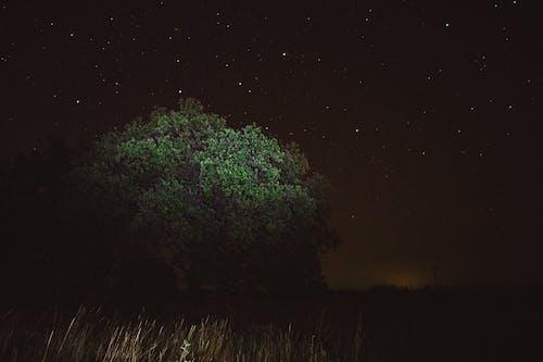 Безкоштовне стокове фото на тему «дуб, зірки, ніч, нічна фотографія»