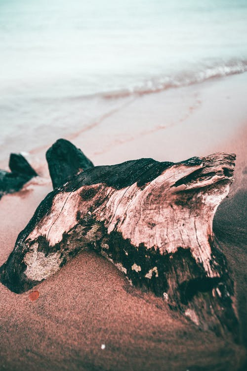 Driftwood on Sand