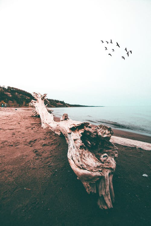 Photo of Driftwood On Seashore