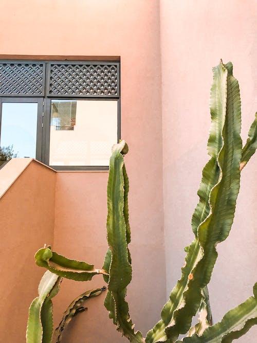 Green Plant Near Wall