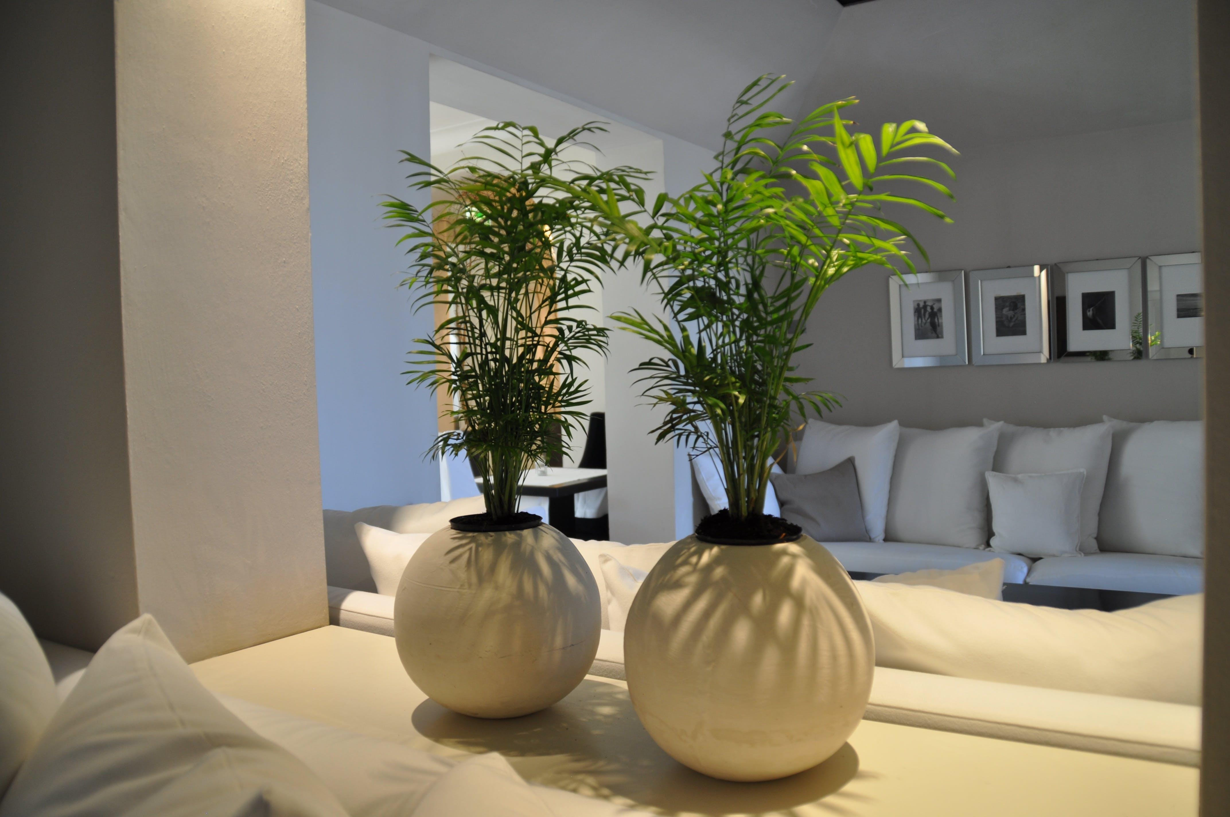 Free stock photo of environment, furniture, hotel, houseplatns