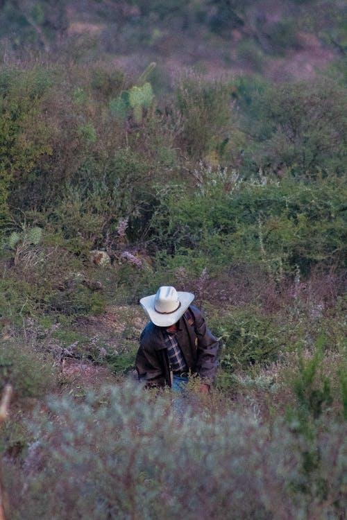 不平, 个人主义者, 乾旱, 亞利桑那州 的 免费素材照片