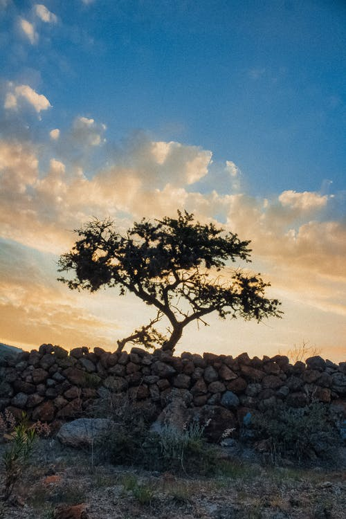 Silhouette Trees on Stone Wall during Golden Hour