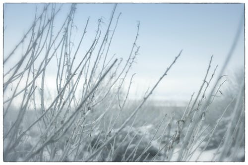 Free stock photo of cold, frost, grass, nature