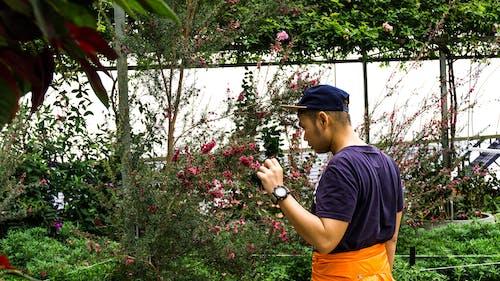 Безкоштовне стокове фото на тему «Азіатський хлопчик, дерево, житель Азії, заводи»