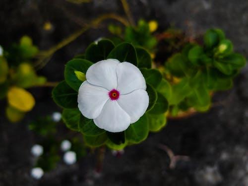 Photos gratuites de belle fleur, concours, feuilles vertes, fleurs blanches