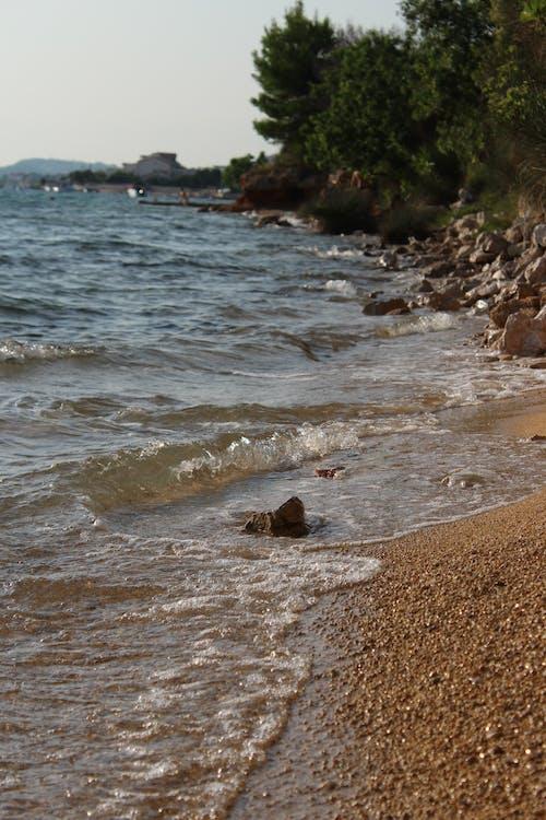 Free stock photo of aqua, reptile, sea