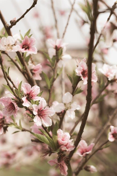 Ilmainen kuvapankkikuva tunnisteilla kukat, kukinta, puu