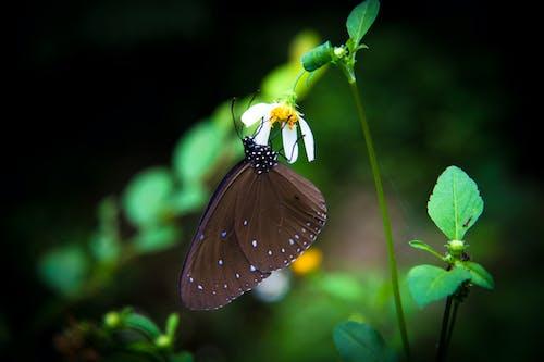 Ilmainen kuvapankkikuva tunnisteilla perhonen, perhonen kukassa