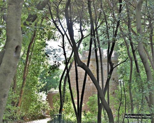 Foto profissional grátis de arborizado, árvores, castelo velho
