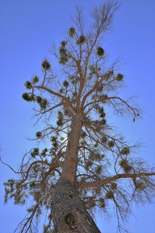 Foto profissional grátis de árvore, céu