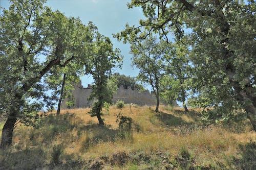 Gratis arkivbilde med gammelt slott, trær