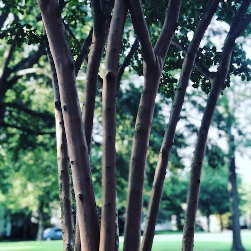 Kostnadsfri bild av grenar, träd, trädgrenar, utlöpare