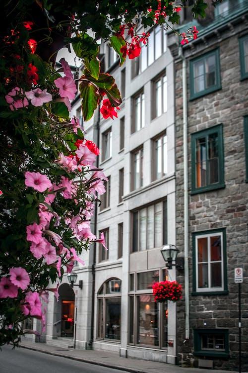 Gratis arkivbilde med arkitektonisk design, arkitektur, blader, blomster
