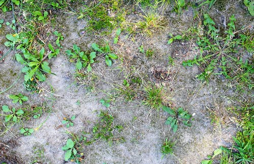 Free stock photo of drought, grass, gray