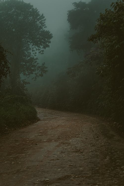 Empty Road Near Trees With Fog