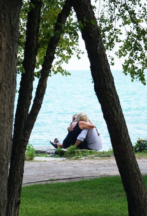Kostenloses Stock Foto zu bäume, beziehung, blätter, draußen