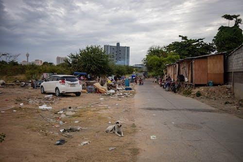 Gratis lagerfoto af baghave, forurening, jungle, katastrofe