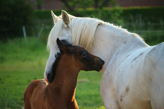 Free stock photo of meadow, horse, pasture, Foal