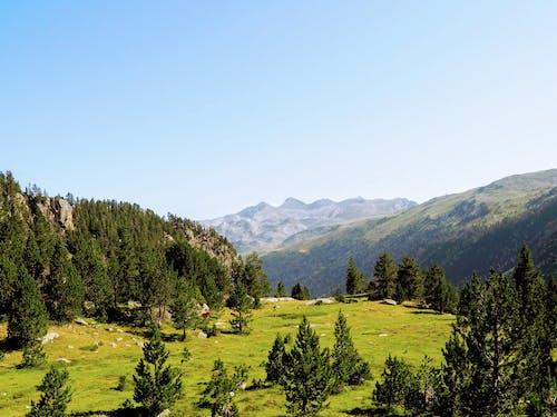 Imagine de stoc gratuită din arbori, arbori veșnic verzi, călătorie, cer