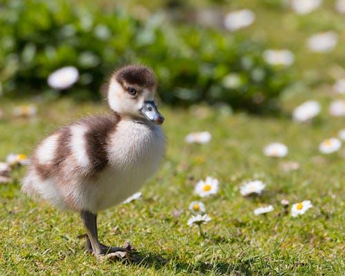 Gratis stockfoto met aviaire, beest, bloemen, concentratie