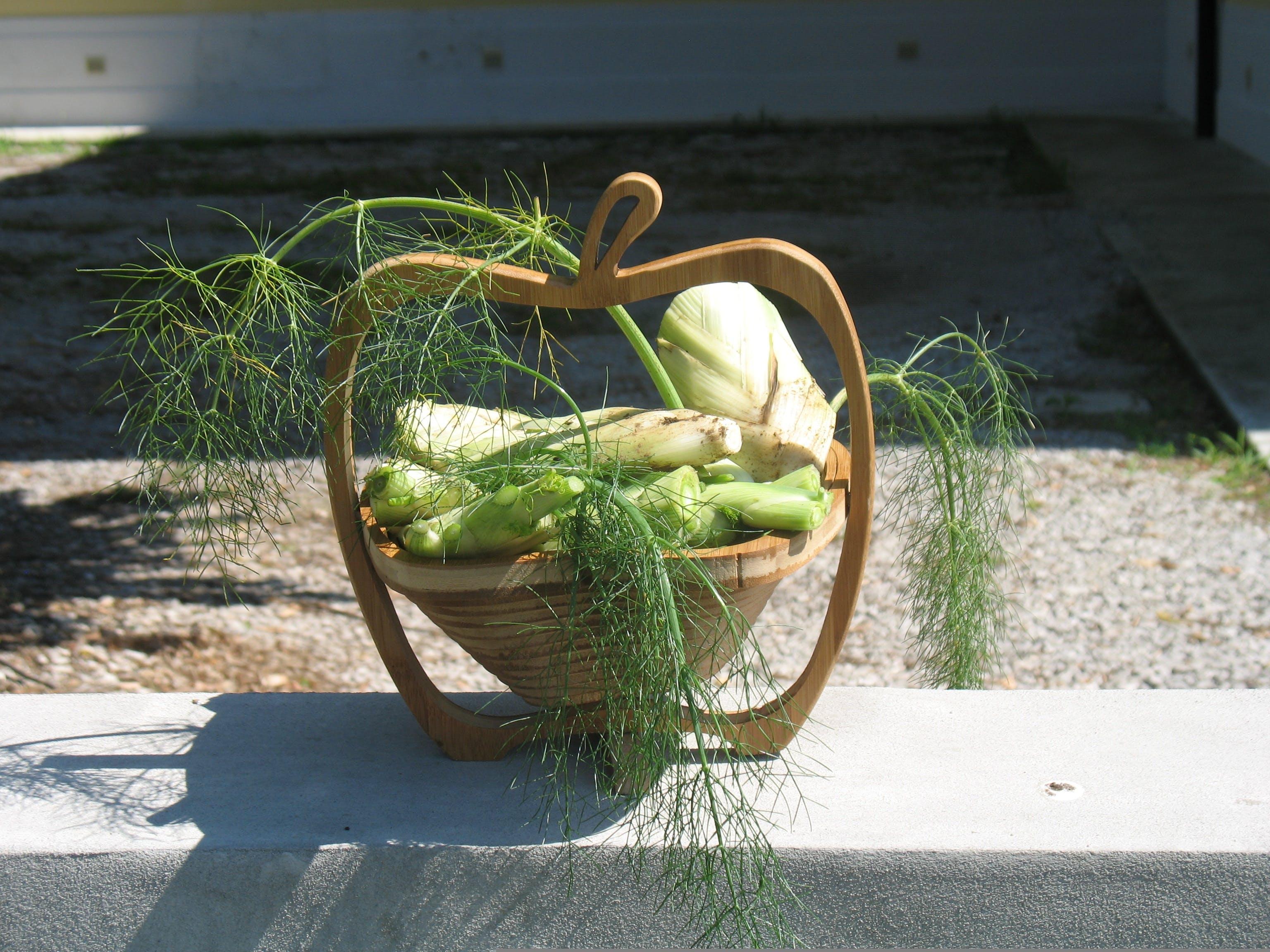 Free stock photo of garden, friuli, gorizia, sociale