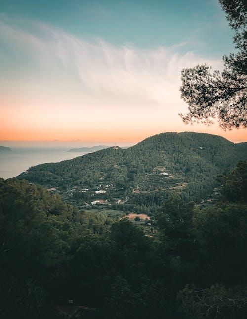 Fotos de stock gratuitas de al aire libre, amanecer, anochecer, arboles
