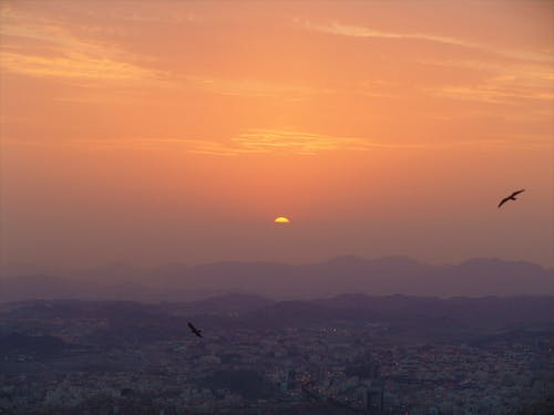 Foto stok gratis alam, awan, burung-burung, horison